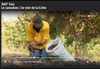 Reportage pour le caroubier de Crète – ARTE